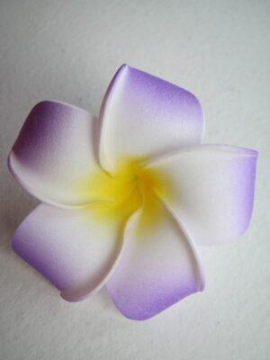 Skumblomst i lilla