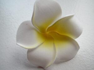 Skumblomst i hvid